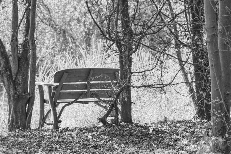 View of an empty bench in forest