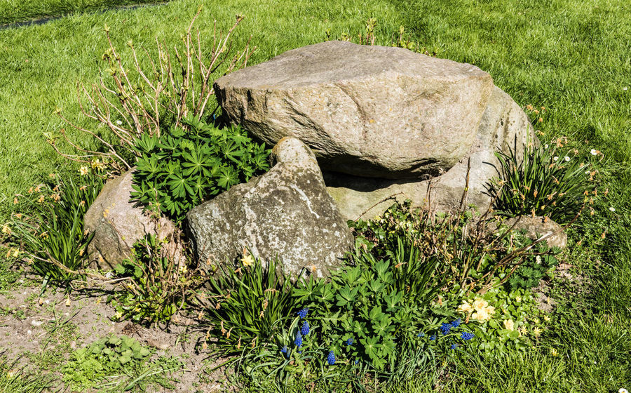 Beauty In Nature Close-up Day Grass Green Color Growth Nature No People Outdoors Stones Stones And Flowers