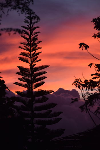 Silhouette palm tree against romantic sky at sunset