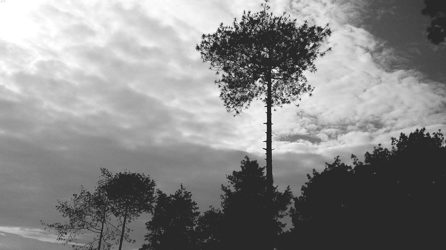 In the dark of the tree Tree Sky Cloud - Sky Nature No People Low Angle View Silhouette Beauty In Nature Outdoors Day Welcome To Black The Great Outdoors - 2017 EyeEm Awards