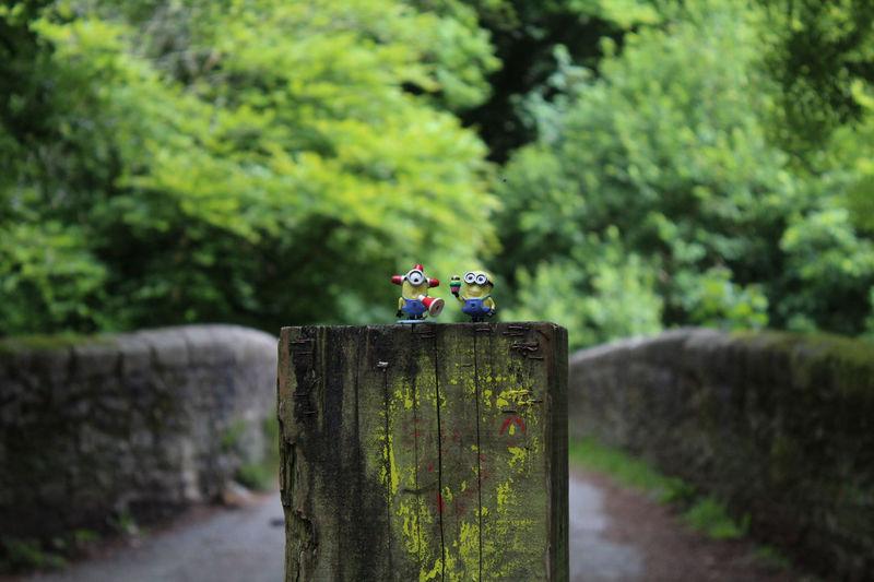 Minions Portrait Devon Rural Scene Outdoors Cartoon Characters Yellow Discord Minions ♥♥ Minions 🍌🍌🍌🍌🍌 Minions ™ Minions_mania Minions Characters Minionsworld MinionsEverywhere Minions🎂🎁🎉😊☺ Minionsssss Minionslove Minions😶