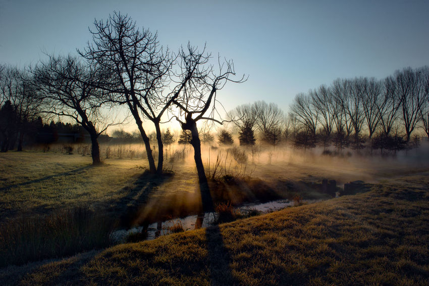 Early gentry morning. Autumn Bare Tree Beauty In Nature Cold Temperature Day Grass Landscape Nature No People Outdoors Sky Tree Winter Shades Of Winter
