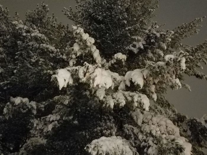 Yeah....Spring in 6 days!!! Tree High Angle View Close-up Snow Covered Cold Blizzard Winter Snowing