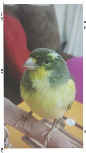my Bird sitting on my finger! Cute Bird