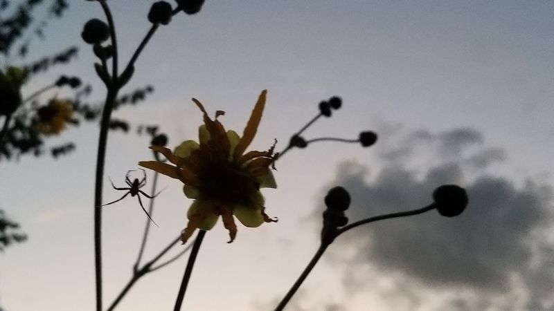 Spider Thru The Fence From Where I Stand EyeEm Selects Time With Friends Beauty In Nature Fog On The Water Tree Flower Head Flower Branch Silhouette Close-up Sky Plant Plant Part Blossom Plant Stem