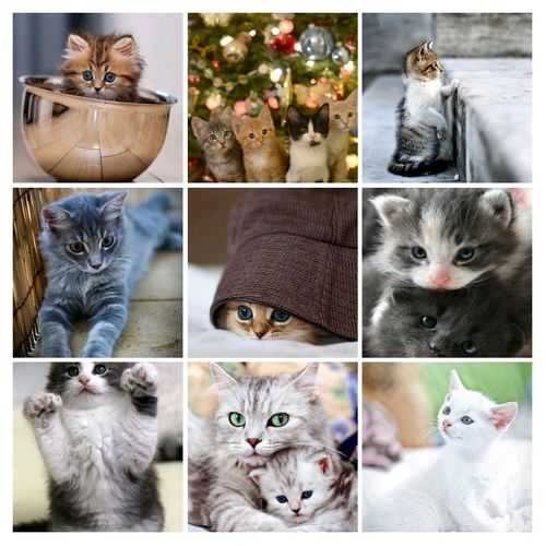 Catys ❤❤❤❤❤❤🤗🤗🤗 Multiple Image Portrait Looking At Camera Christmas Variation Digital Composite Close-up