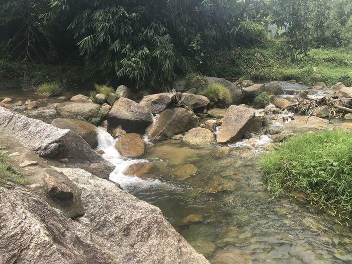 Rock Tree Water
