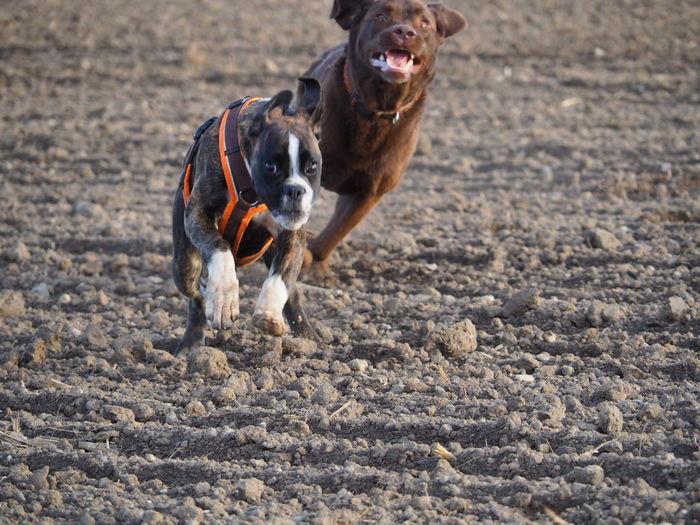 Hundeglück 😍 Juno's World I Love My Dog Dog Boxer Enjoying Life EyeEm Nature Lover Authentic Moments Capture The Moment