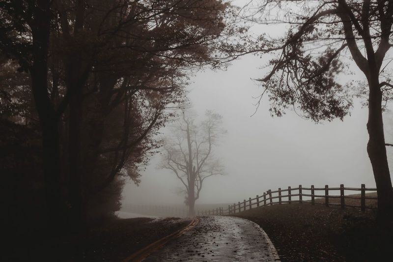 The fog of illusion, the fog of confusion is hanging all over the world. -Van Morrison Fog Tree Plant Nature Sky Water Transportation Tranquility Growth Barrier Road Beauty In Nature No People The Way Forward Day Tranquil Scene Outdoors Scenics - Nature Direction Branch
