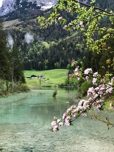 Scenic view of pink flowers by lake