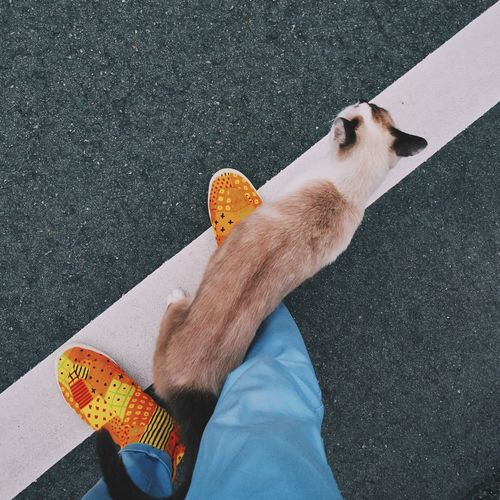 Fashion Shoes Cat Low Section One Person Human Leg High Angle View Limb Domestic Animals