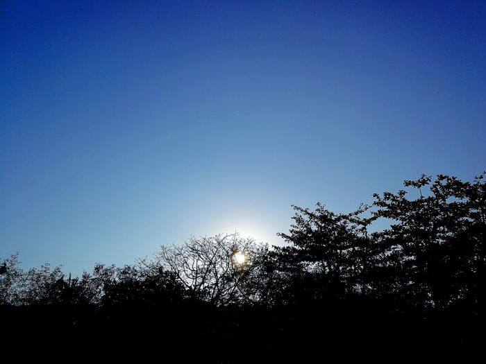 Sun Philippines Aporeef Mindoro Summer EyeEm Selects Huawei HuaweiP10 PhonePhotography Huaweip10photography Leicacamera Huaweiphotography Mobilephotography ASIA #FREIHEITBERLIN Silhouette Clear Sky Sky Branch Woods Bare Tree