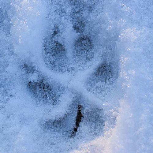 Spurensuche Tierspuren , Pfote , Animal , Tier , Winter , Schnee , Schneespuren , Snow