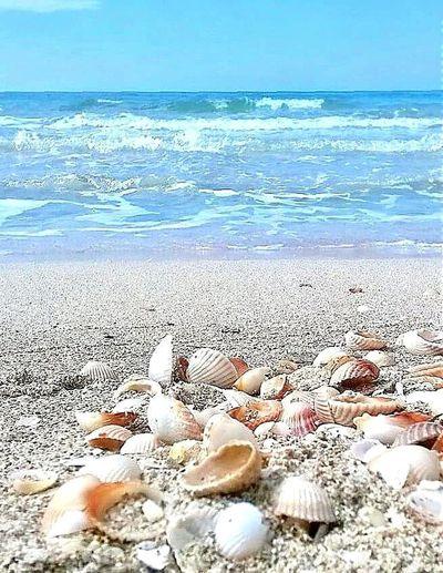 Spiaggia Beuty Of Nature Nature Photography Mare Spiaggia🐚 Spiaggeparadisiache Sabbiabianca Conchiglie First Eyeem Photo Sea Beach Beachporn Beachphotography Beachlandscape Italia Lungomare