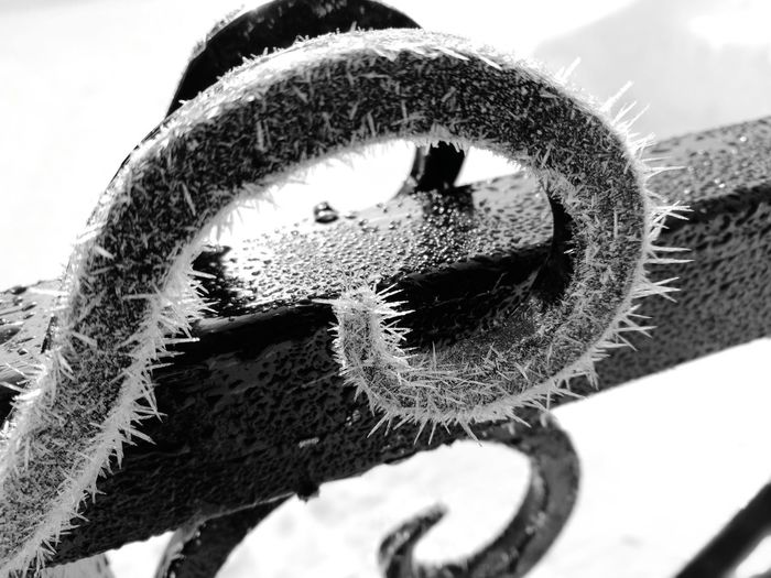 Ice Frozen Nature Gate Winter Close-up No People