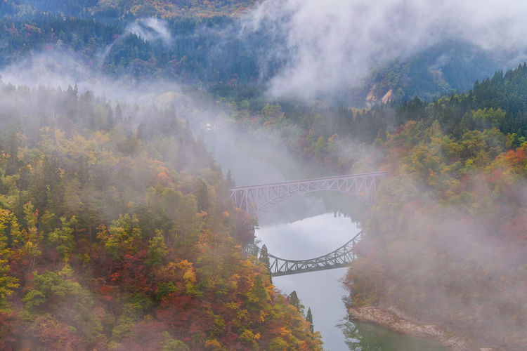 Panoramic view of trees and bridge during foggy weather