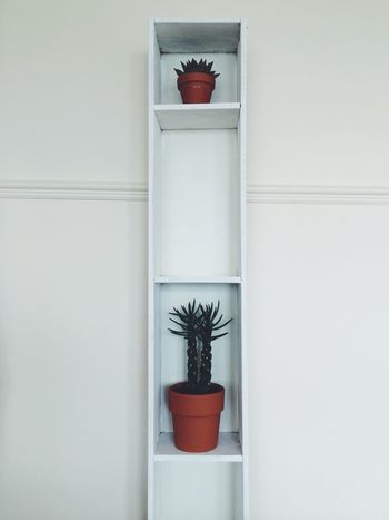 Saturday afternoon DIY Minimal Interior White Cactus