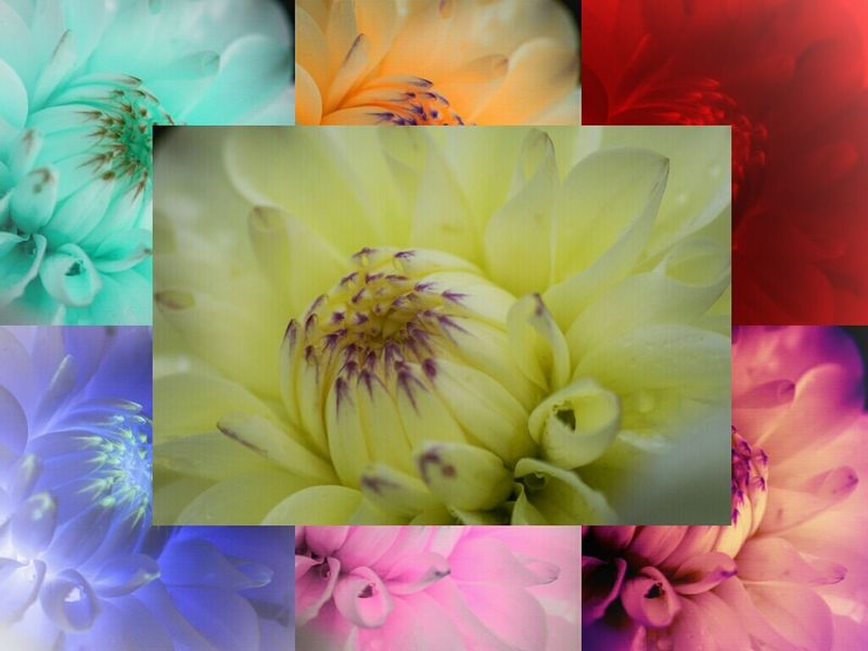 A Flowers For My Friends and a BnA Before 'nd After (central is original pic) Macroclique Pantone Colors By GIZMON