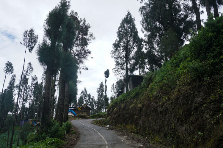 Path around the Plantation on the hill, Mount Bromo. Tree Plant Direction The Way Forward Road Transportation Growth Sky Nature Day No People Diminishing Perspective Beauty In Nature Tranquility Sign Street Green Color Tranquil Scene Forest Land Outdoors Long Bromo Bromo-tengger-semeru National Park Bromo Mountain