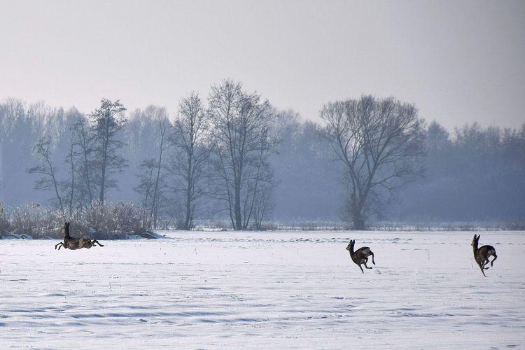 Deer running on snow covered landscape