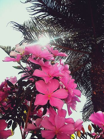 Flowers Amoflores *-*