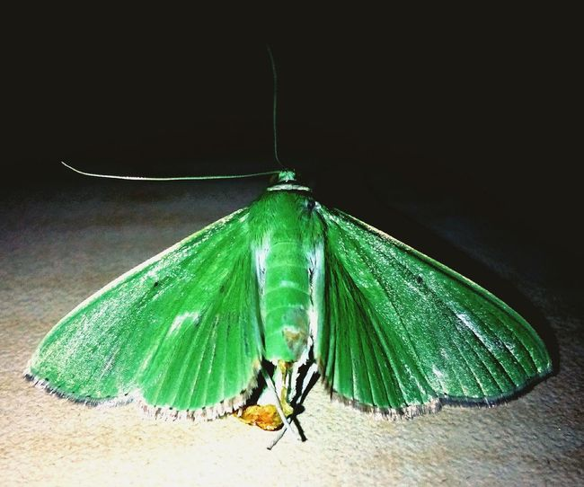 Butterfly ❤ Love ♥