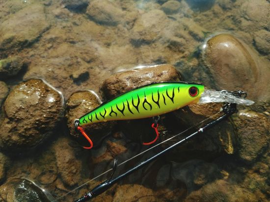 lure fishing for casting Casting Fish Minnows Hooks Freshwater Fish River Waterfall Sinking Fishing Shallow Water Carb Fish Bass Sebarau Rod Leader Fg Knot Bait Bait Casting Ultralight Sport Fishing Fishing Lovers Text Water No People Animal Nature High Angle View Close-up Day Green Color