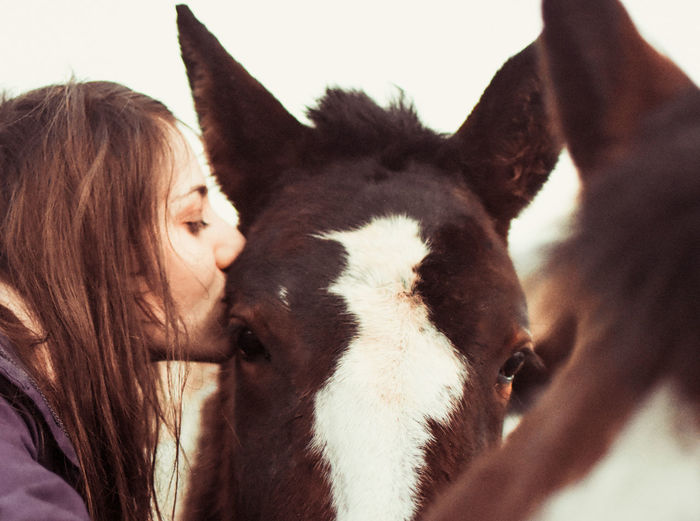 Horses Kiss Love Rural Animal Themes Close-up Countryside Day Domestic Animals Horse Horse Photography  Indoors  Kisses Livestock Love ♥ Mammal No People One Animal Rural Scene