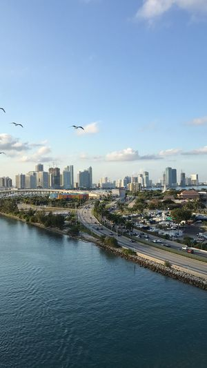 Flying High Street Of Miami Cloud - Sky View Trees Sea And Sky Cars Tower Birds Palm Tree