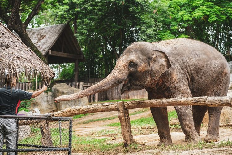 View of elephant in zoo