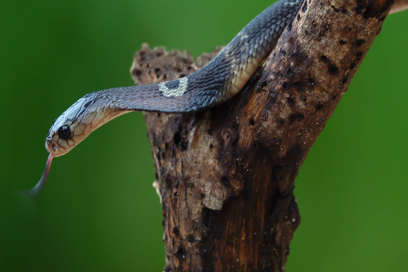 Close-up of snake on tree trunk