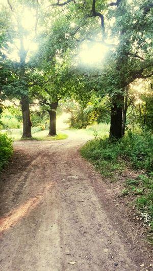 Пожалуй, именно так выглядели тропы в лесу Лотлориена Hobbit Lordoftherings Tolkien Lotlorien