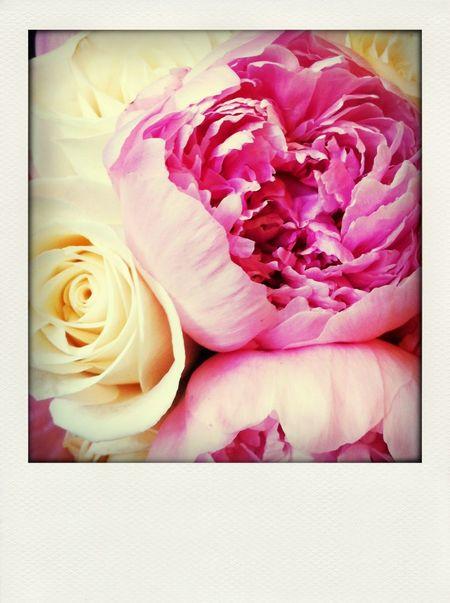 ? Flowers Peonies