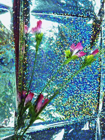 Winter Wonderland Backgrounds Cards Background Holiday MUR Holidays silk flowers Sparkle Winter Wonderland ❄