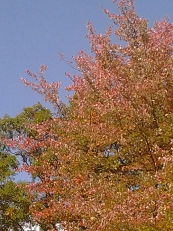 The Purist (no Edit, No Filter) .. Beautiful Autumn .. Fall Colors .. Taken By Me ..HAPPY OCTOBER EYEM! :):)