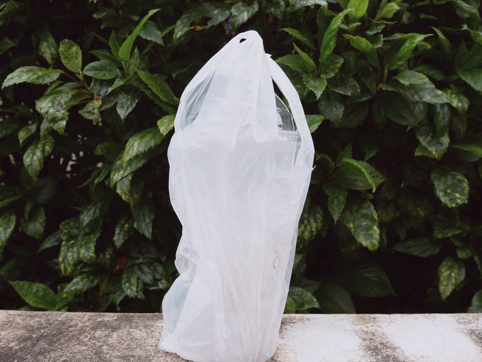 Bag Close-up Day Focus On Foreground Freshness Green Color Growth Healthy Eating Leaf Nature No People Outdoors Plant Plant Part Plastic Plastic Bag Polythene Still Life Wellbeing White Color