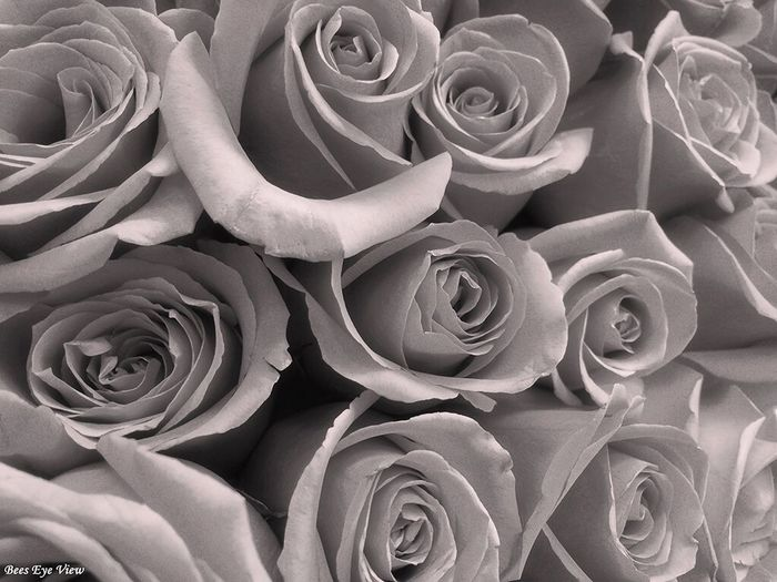 Roses Were Red Bouquet Roses Black & White Floral