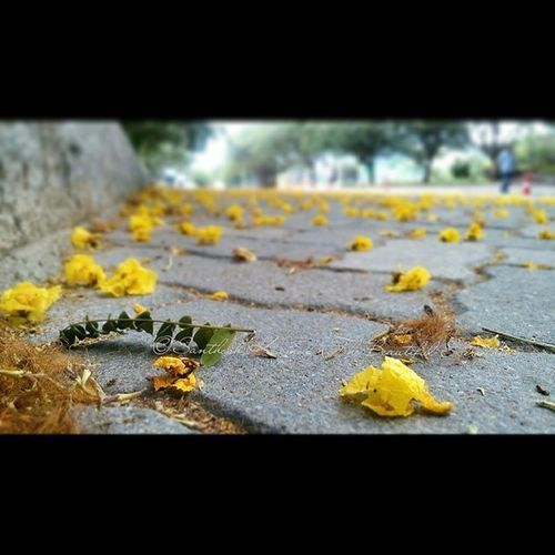 The Road less taken shot with my LavaIrisX8 and shared with Random Latergram instagood timePass PhotoGrid TheBeautifulEverything ig_hyderabad ig_india flowers pavement mobilePhotography mobileClickPhotography