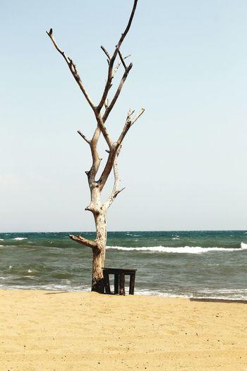 Beach Tree Sea First Eyeem Photo