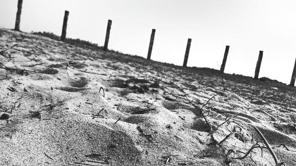 Blackandwhite B&w B&w Nature Nature_collection Day Beauty In Nature Nature Purity Illuminated EyeEmNewHere First Eyeem Photo Sky Sunlight Close-up Beach Outdoors Shadow