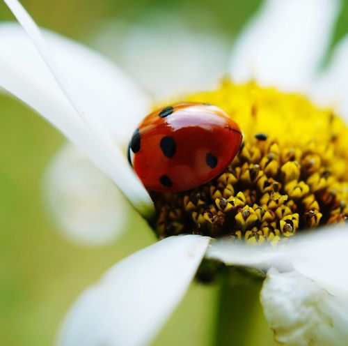 Colorful Macro Photography Of A Ladybird