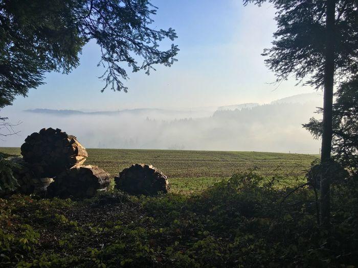 Log Stack On Grassy Field Against Sky