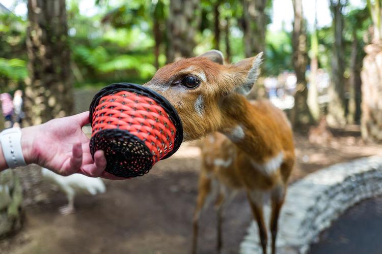 Cropped hand feeding deer at zoo