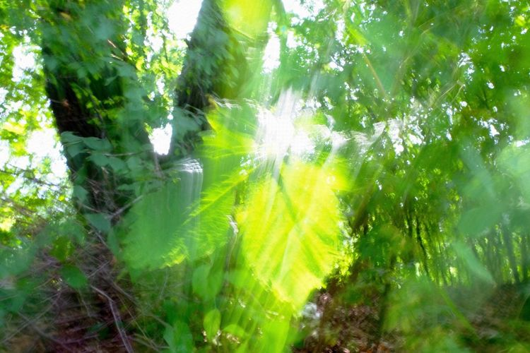 Beauty In Nature Full Frame Glitch Glitch Experiment Glitchart Green Color Lens Flare Lush Foliage Nature Sunlight
