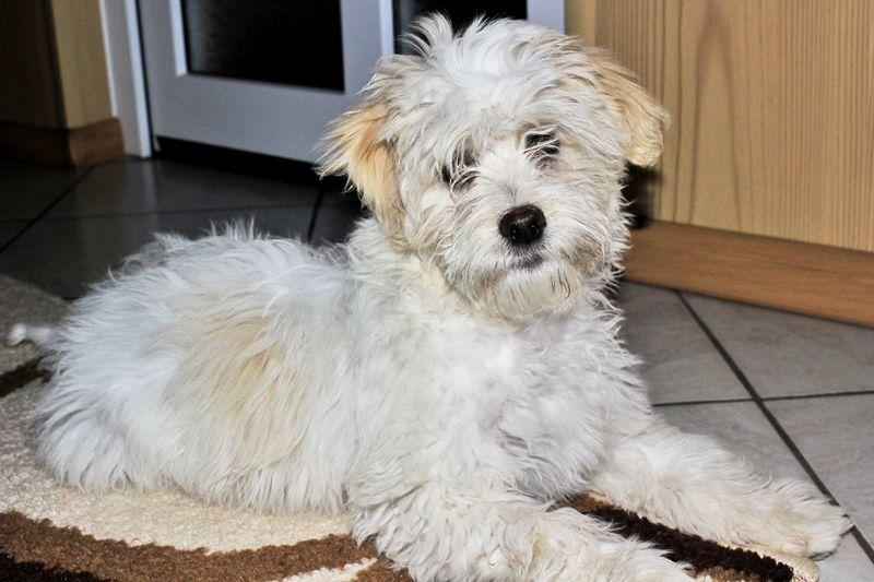 Puppy Portrait Dog