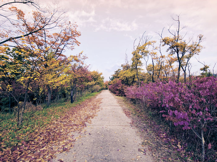 Korean Fall Mobilephotography LG G7 LGG7 ThinkQ Fall Fall Colors Fall Collection Incheon South Korea Beautiful Wallpaper Flower Tree Multi Colored Rural Scene Sky Plant Landscape Plant Life