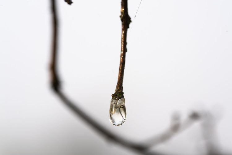 Close-up of wet twig during winter