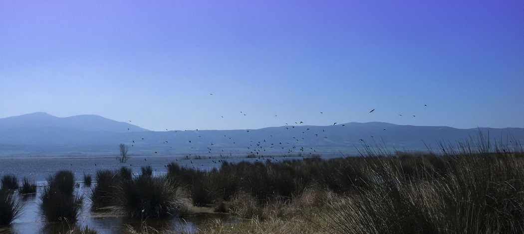 Lake Koroneia Birds Flying Natureporn Nature Sky Picoftheday Beauty In Nature