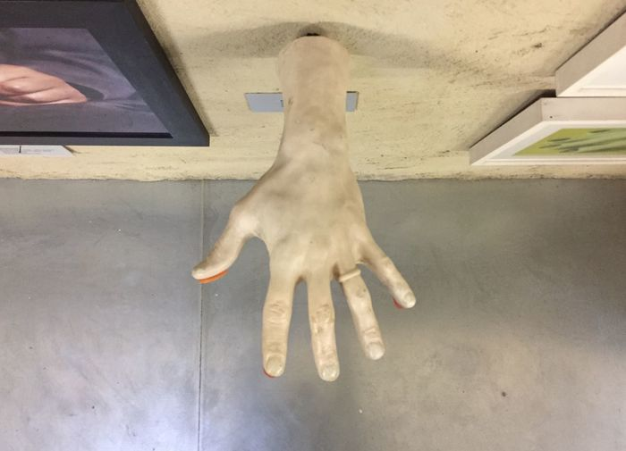 Real People One Animal Human Body Part One Person Human Hand Pets High Angle View Mammal Hand Lifestyles Day