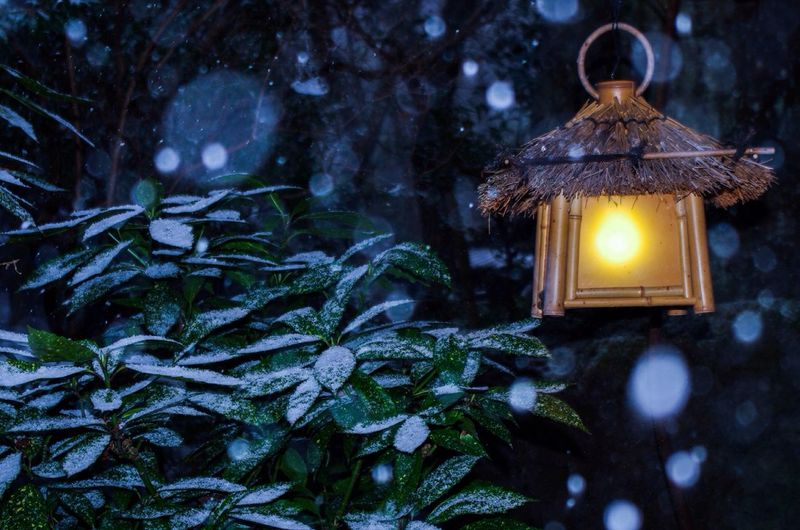 Low angle view of lantern by plant during snowfall